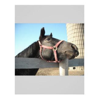 Horse/Ranch/Barn Flyer