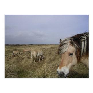 Horse Ranch Farm Destiny Nature Background Post Card