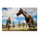 Horse Ranch Farm Destiny Nature Background Postcard