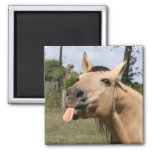 horse razzberry 2 inch square magnet