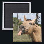 """horse razzberry magnet<br><div class=""""desc"""">buckskin horse with tongue stuck out as if in a razzberry or bronx cheer</div>"""