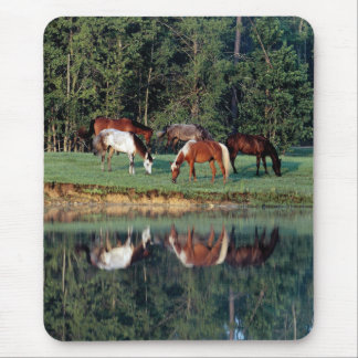 Horse Reflection Mouse Pad