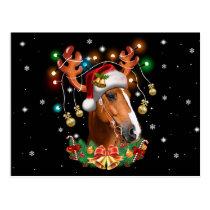 Horse Reindeer Postcard