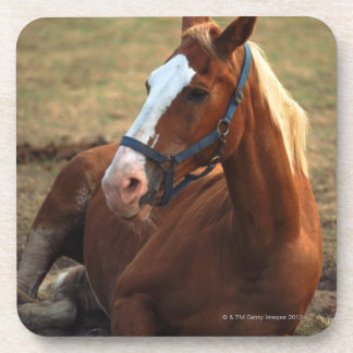 Horse resting on grass, close-up beverage coaster
