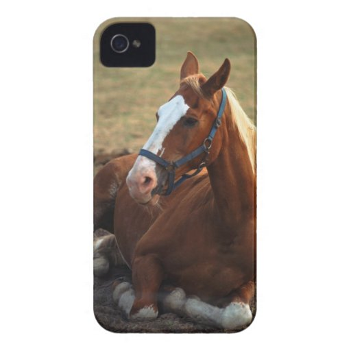 Horse resting on grass, close-up iPhone 4 cover