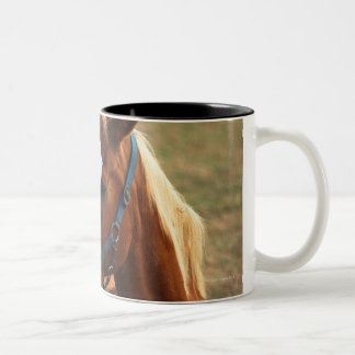 Horse resting on grass, close-up Two-Tone coffee mug