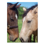 Horse Romance Postcard
