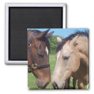 Horse Romance Square Magnet Magnets