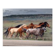 horse roundup1 postcard