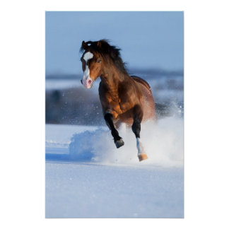 Horse running across the field in winter print
