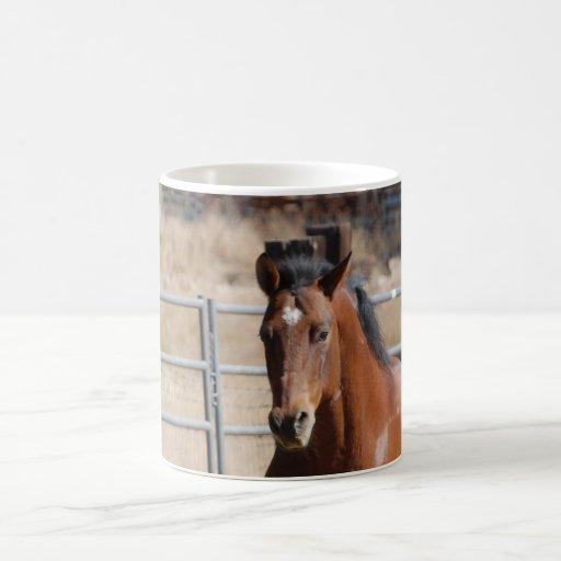 Horse Running in Paddock Classic White Coffee Mug