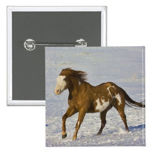 Horse Running in Snow 2 Inch Square Button