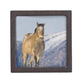 Horse Running in Snow 2 Jewelry Box