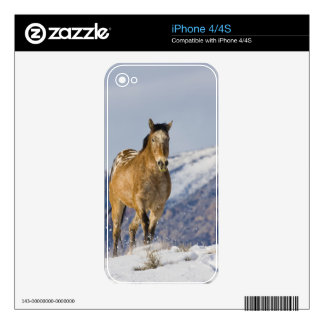 Horse Running in Snow 2 Skins For iPhone 4