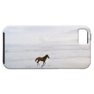 Horse running on the beach iPhone 5 covers