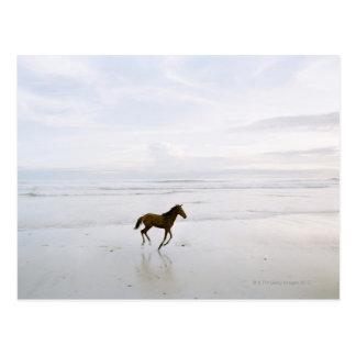 Horse running on the beach postcard