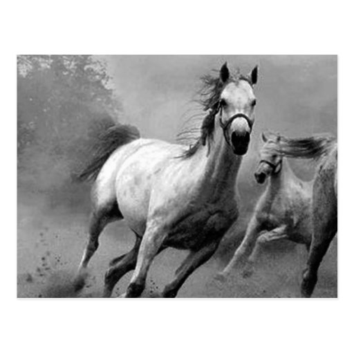 Horse Running Post Card