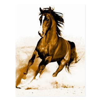 Horse Running Postcard