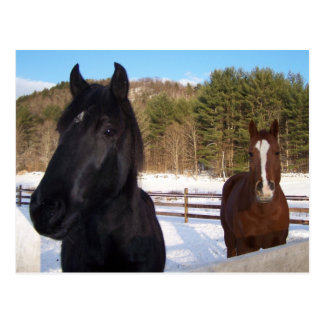 HORSE SCENTS POST CARDS