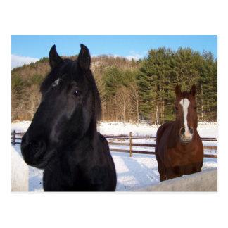 HORSE SCENTS POSTCARD