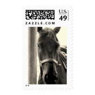 Horse Sepia Postage Stamps