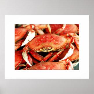 Horse Shoe Crabs  Fine Art  Photograph Posters