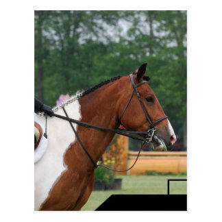 Horse Show Ring  Postcard