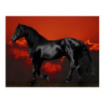 Horse silhouette at sunset post cards