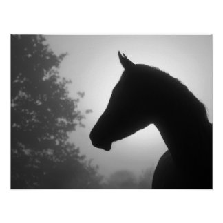 Horse silhouette in black and white poster