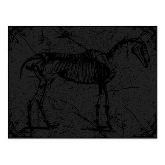 Horse skeleton dark gray postcard