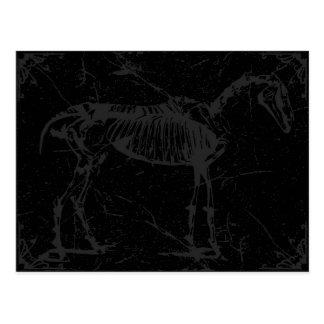 Horse skeleton gray postcard