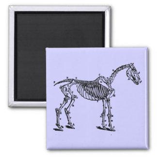 horse skeleton magnets