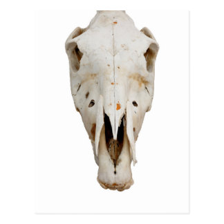 horse skull postcard