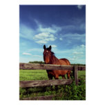 Horse&Sky Posters