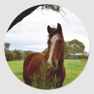 Horse_Sniffing_A_Bush,_Large_Round_Stickers Classic Round Sticker