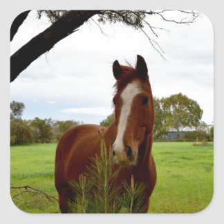 Horse_Sniffing_A_Bush,_Large_Square_Stickers Square Sticker