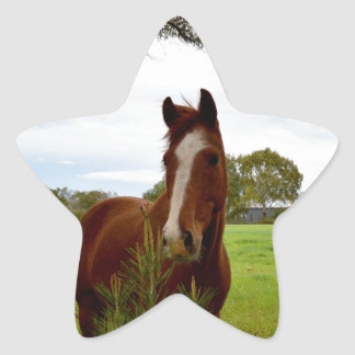 Horse_Sniffing_A_Bush,_Star_Stickers Star Sticker