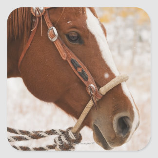 Horse Square Sticker