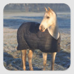 horse square stickers
