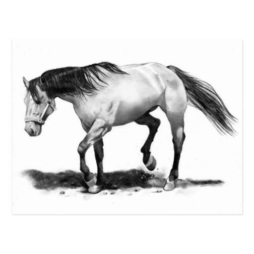 HORSE, STALLION, PENCIL ART REALISM POSTCARD