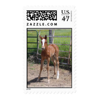 Horse stamp - Adorable Filly