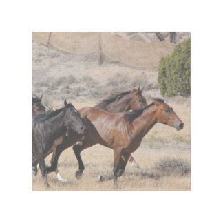 Horse Stampede Gallery Wrap