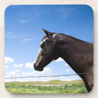 Horse standing at fence in pasture beverage coaster