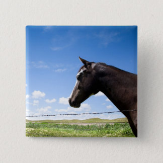 Horse standing at fence in pasture button