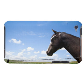 Horse standing at fence in pasture iPod touch cover
