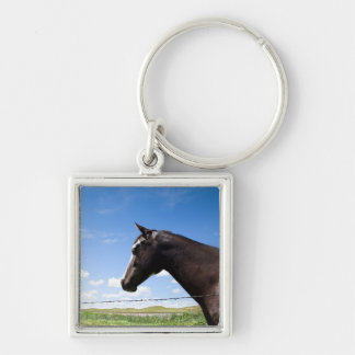 Horse standing at fence in pasture key chain