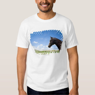 Horse standing at fence in pasture t-shirts