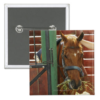 Horse standing in a stable button