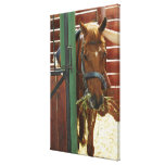 Horse standing in a stable canvas print