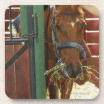 Horse standing in a stable drink coaster